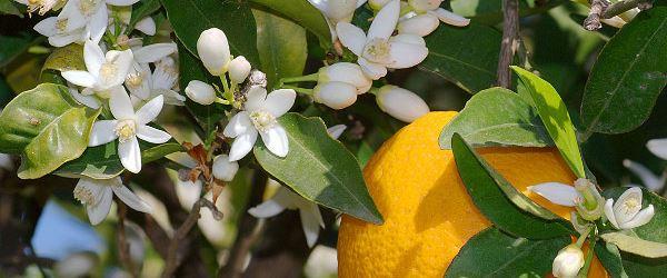 honey_herbs_orange