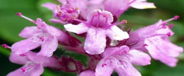 honey_herbs_thyme